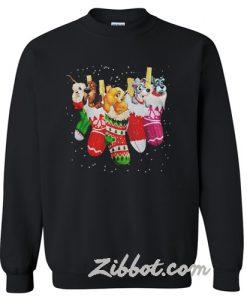 Dog in socks Christmas sweatshirt